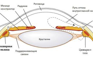 Цилиарная мышца глаза