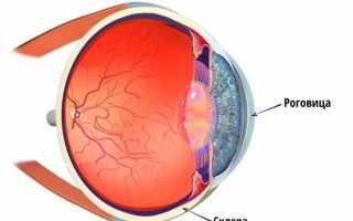 Наружная оболочка глаза