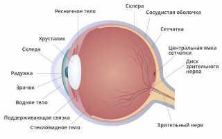 Какая часть глаза регулирует количество света попадающего на сетчатку